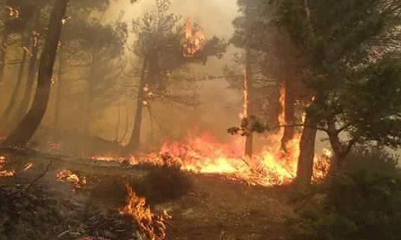 حرائق منطقة مصياف في ريف حماة الغربي، الاثنين 25 نيسان.