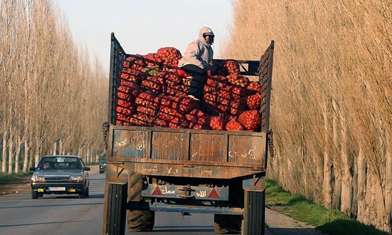 شاحنة تحمل خضار وفواكه للتصدير شمال لبنان (ديلي ستار - لبنان)
