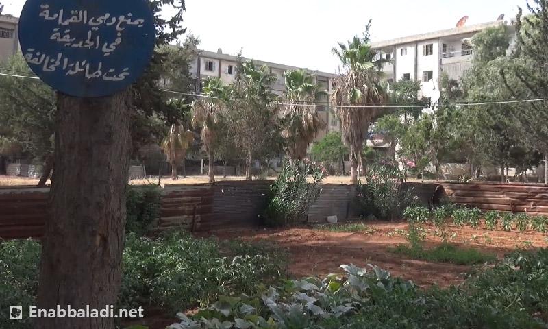 حديقة عامة مزروعة بالمحاصيل في حلب (عنب بلدي)