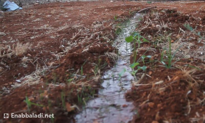 أرض زراعية في إدلب - (عنب بلدي)