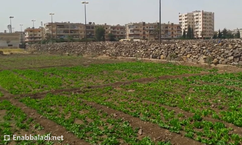 حديقة مخصصة لزراعة الخضراوات في حي الوعر (عنب بلدي)