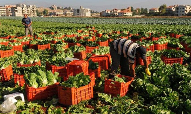 الصادرات الزراعية السورية