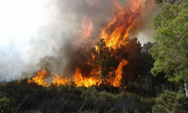 """حرائق في غابة """"الصليب"""" في محافظة طرطوس- الخميس 18 آب (فيس بوك)"""