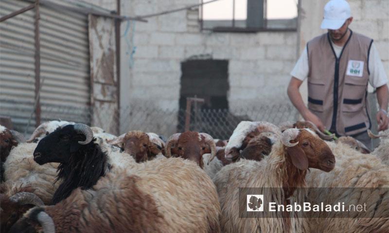 تجهيزات أضاحي العيد في الغوطة الشرقية (عنب بلدي)