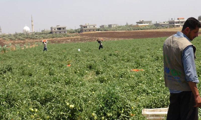 مشروع زراعي في المنطقة الغربية من محافظة درعا (راف)