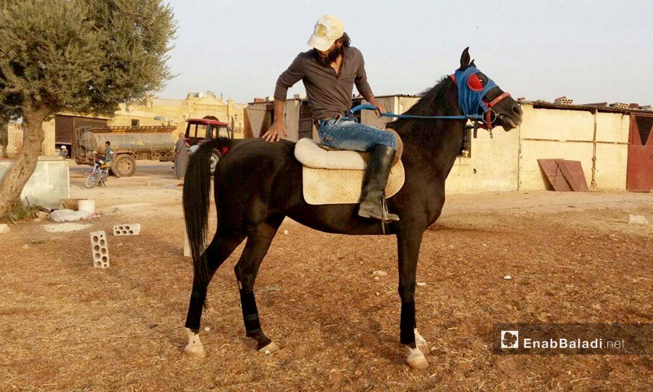 خيول في معرة النعمان بإدلب - تشرين الأول 2016 (عنب بلدي)