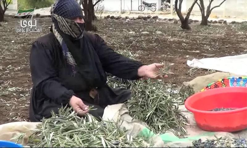 امرأة تفرز ثمار الزيتون في مدينة نوى بريف درعا (يوتيوب)