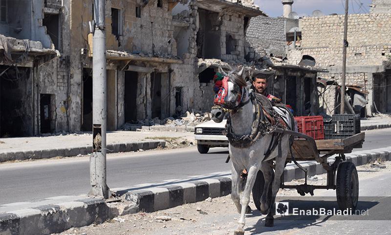 """""""حنتور"""" يحمل علب الخضار في حلب - 11 تشرين الأول 2016 (عنب بلدي)"""