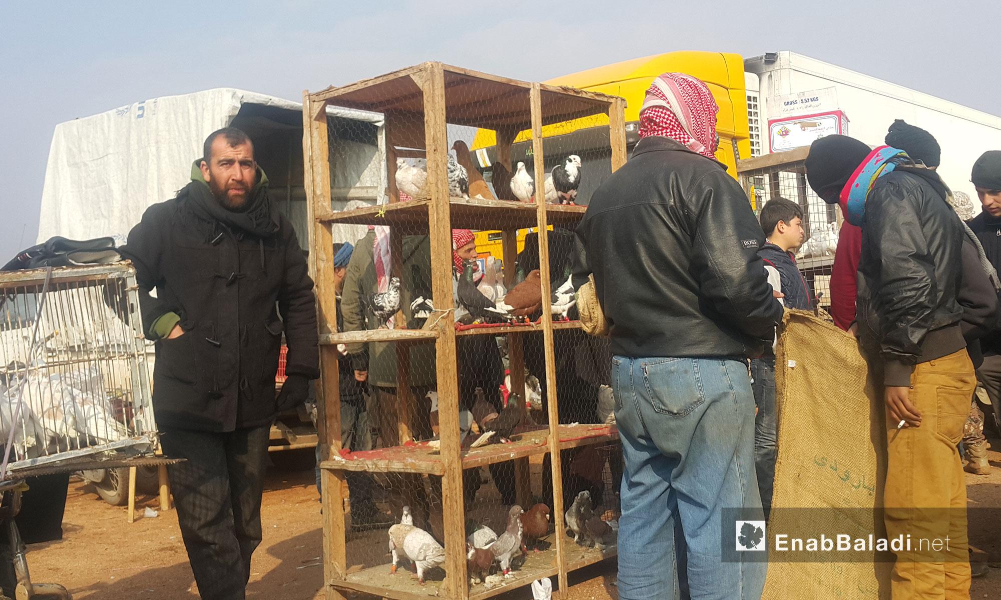 بائع طيور في السوق المخصص لها بمعرة مصرين - 20 كانون الثاني 2017 (عنب بلدي)