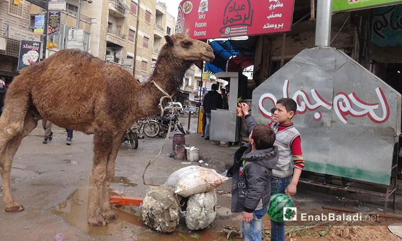 محل لبييع لحم الجمل في إدلب - 2 آذار 2017 (عنب بلدي)