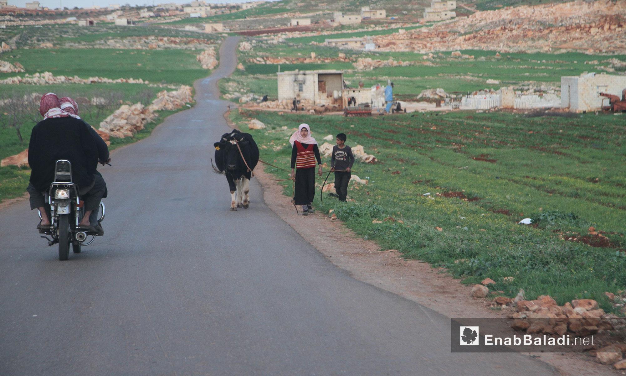 جبل شحشبو في ريف حماة مع دخول فصل الربيع - 28 آذار 2017 (عنب بلدي)