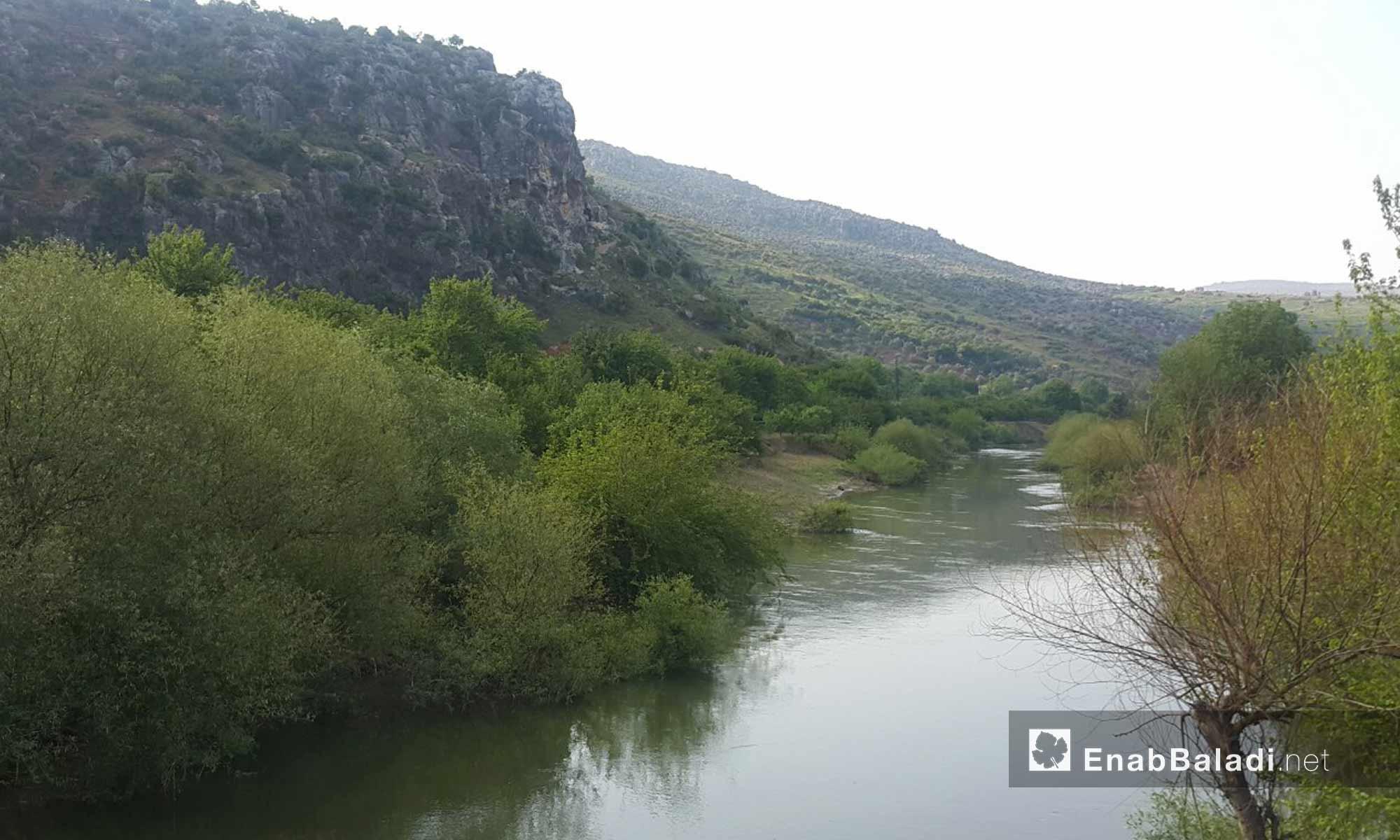 نهر العاصي في منطقة دركوش بجسر الشغور - 16 نيسان 2017 (عنب بلدي)
