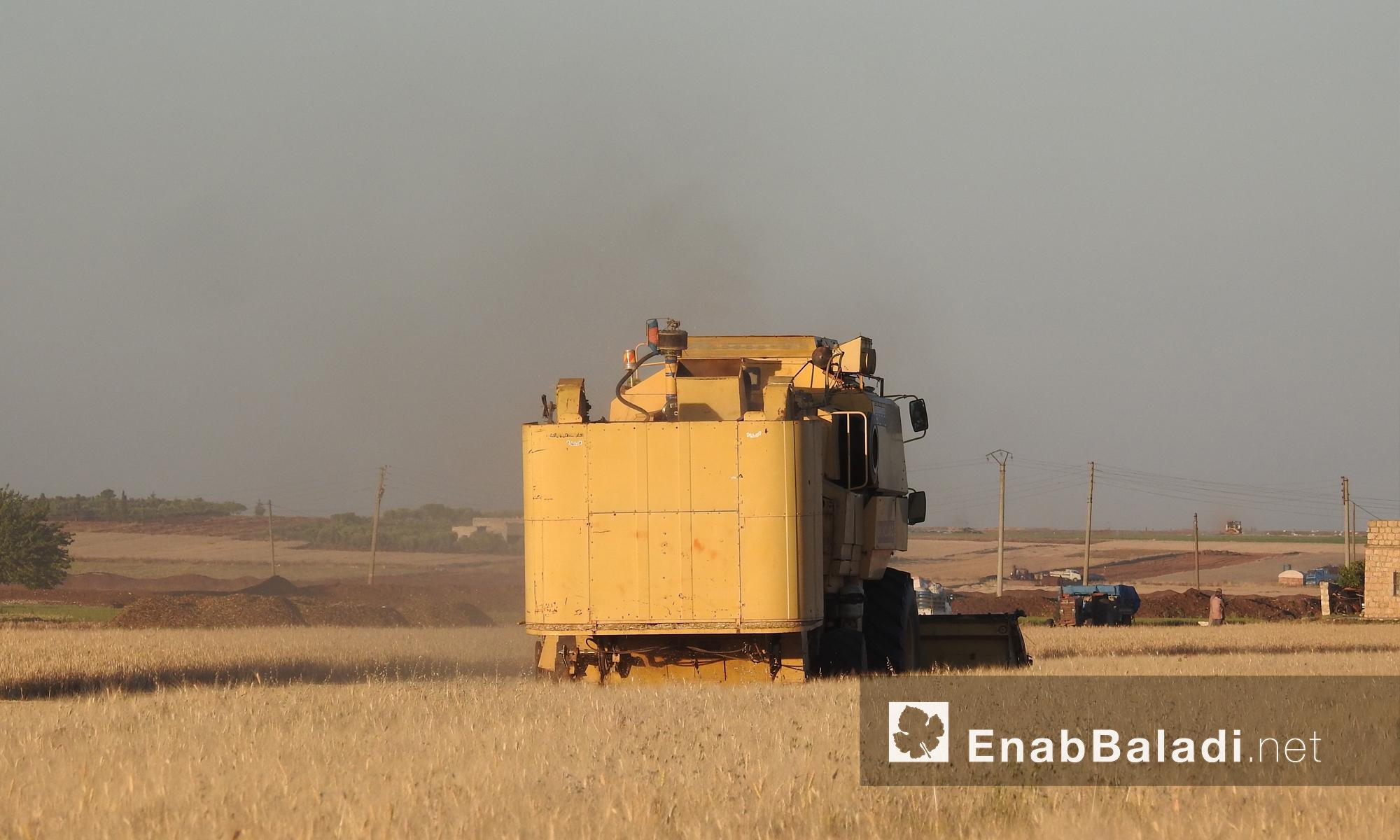 موسم الحصاد في ريف حلب الشمالي- 30 أيار 2017 (عنب بلدي)