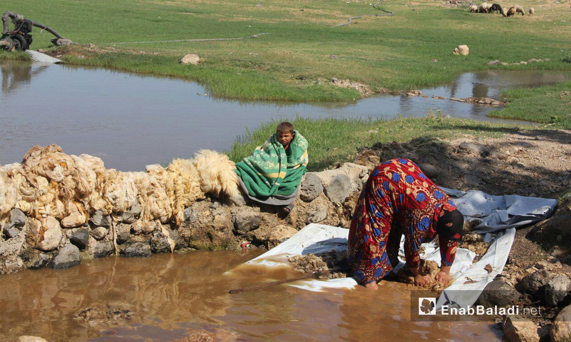 إحدى نساء بلدة قليدين في سهل الغاب بريف حماة تنظف الصوف على إحدى السواقي التي يغذيها بئر البلدة - 9 تموز 2017 (عنب بلدي)