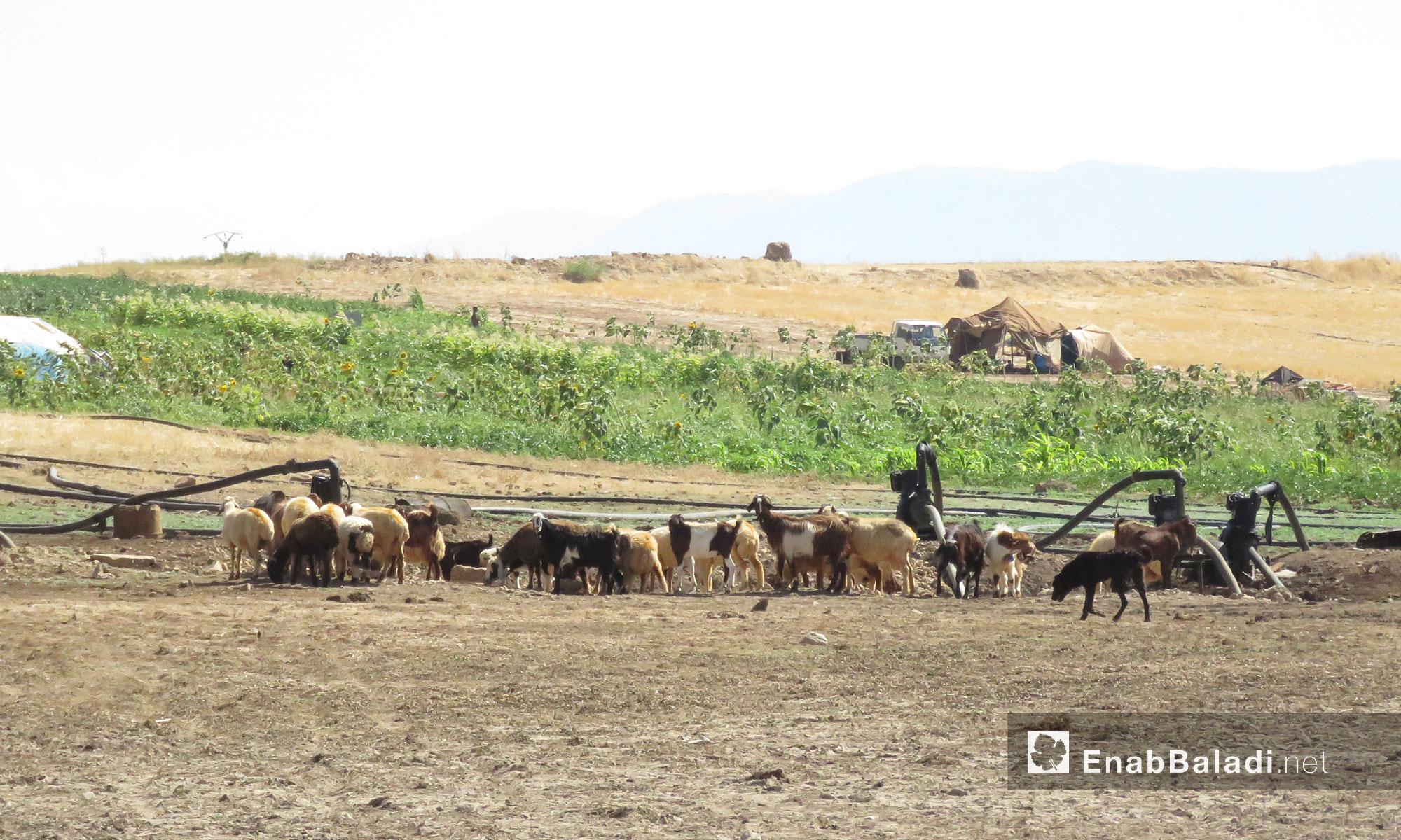 ويعد من أهم السدود في المنطقة الوسطى ويقع بالقرب من سد زيزون