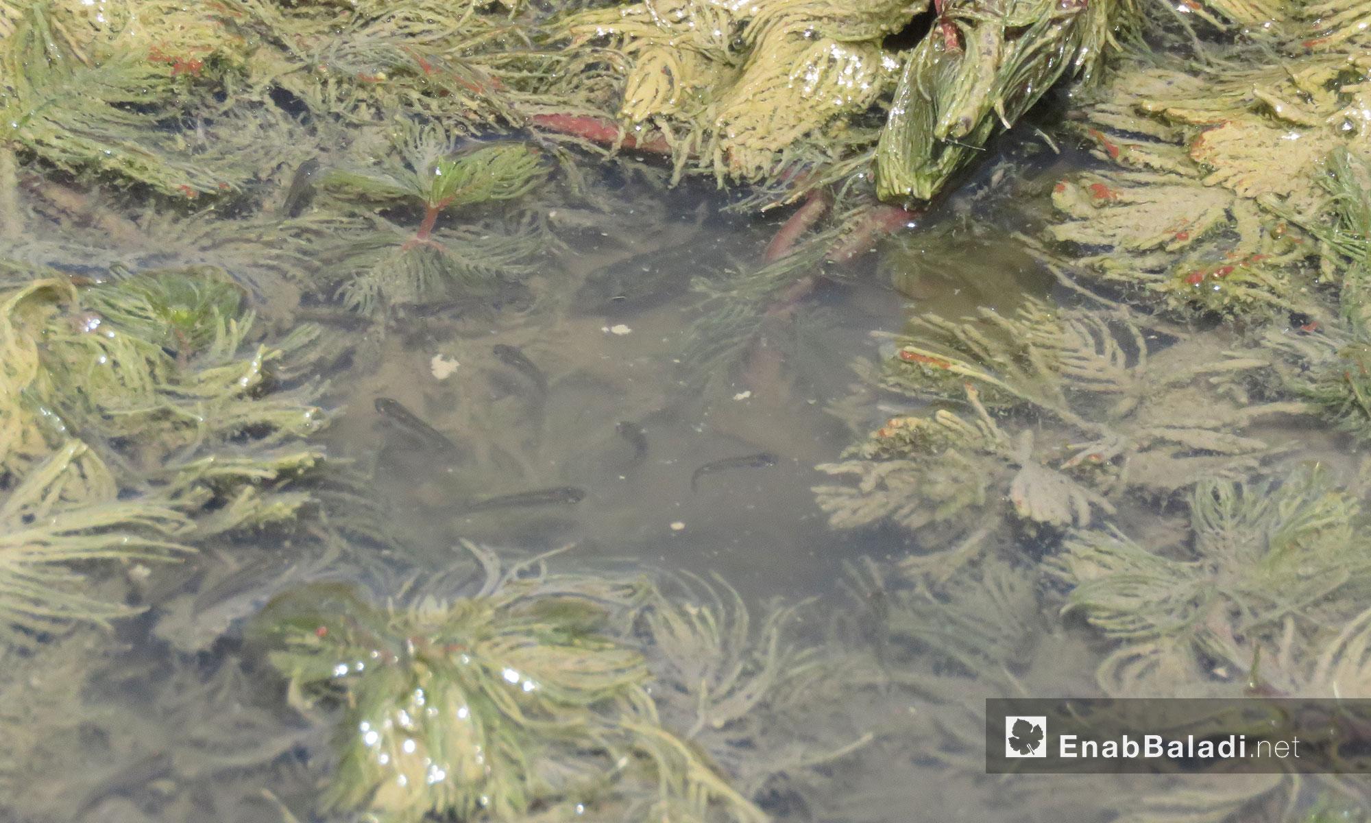 أحد أهم أسباب جفاف السد تعطل المضخة المركزية التي كانت تغذيه