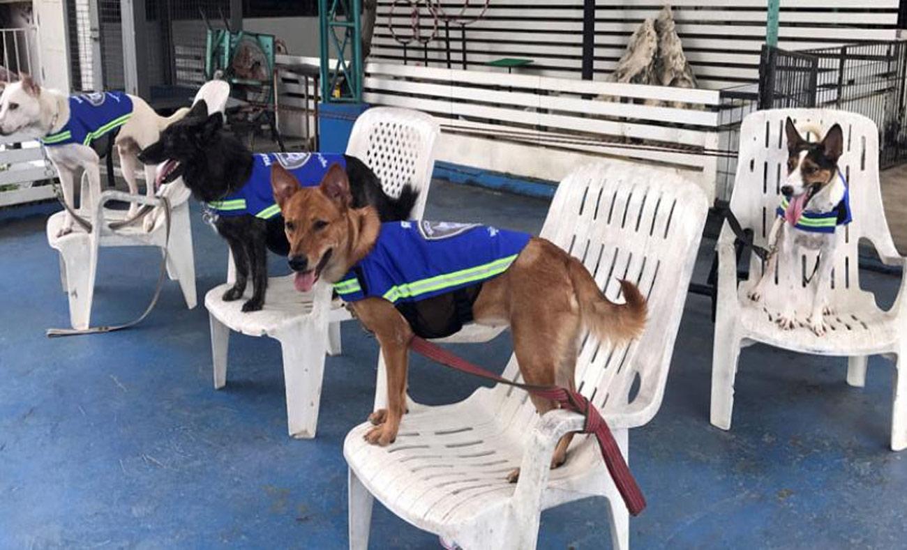 """كلاب ترتدي """"سترات ذكية"""" ضمن مشروع وكالة """"تشيل"""" في بانكوك - 31 آب 2017 (رويترز)"""