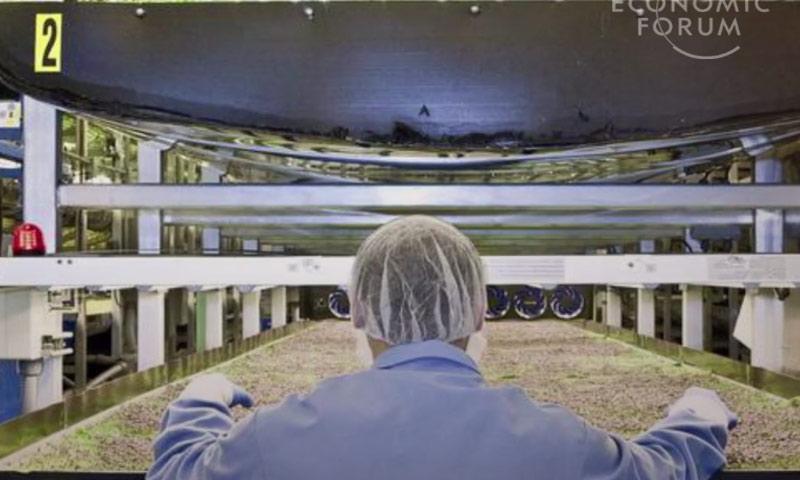 نموذج من مزارع نيوجرسي التي لا تستخدم التربة (world economic forum)
