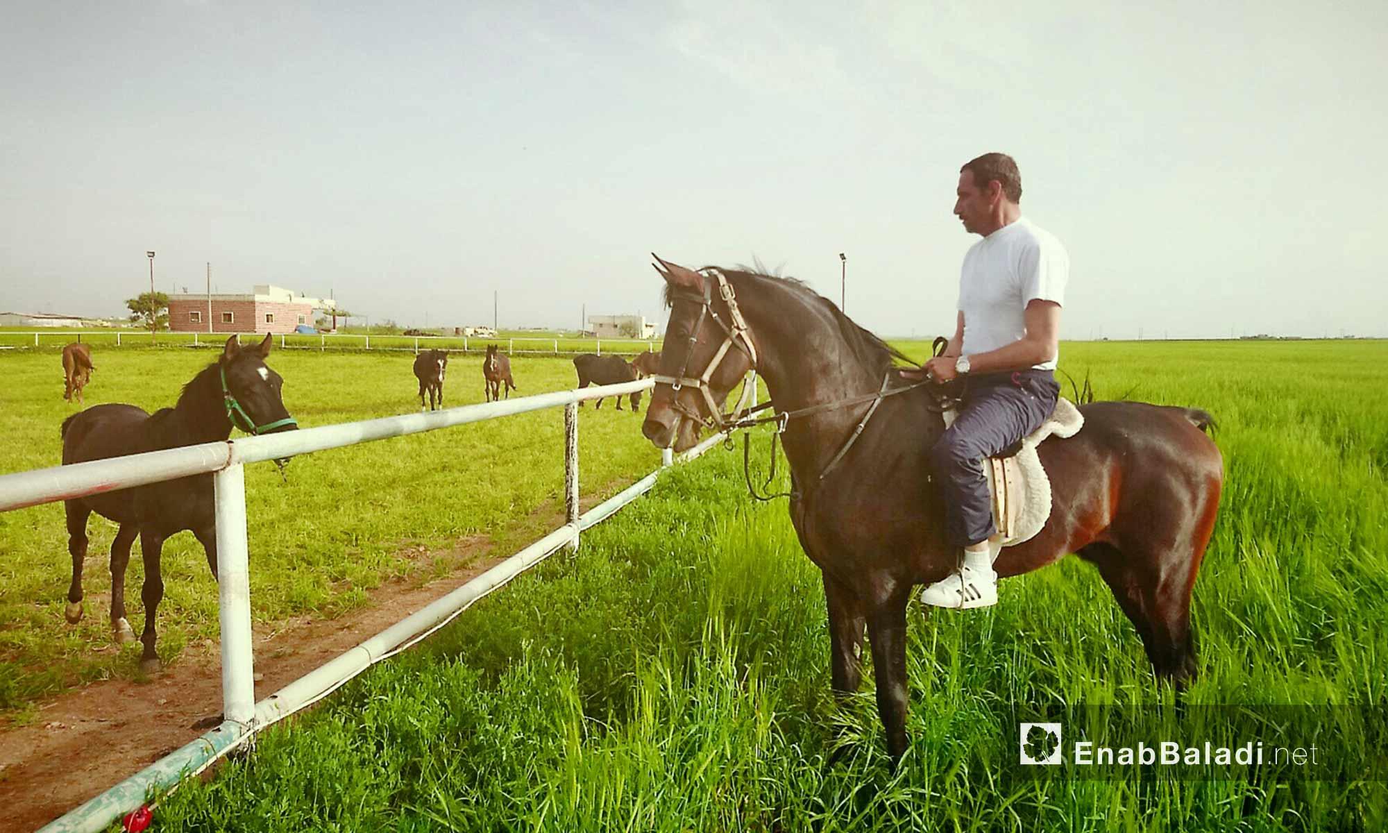 أحد مرابط الخيول العربية الأصيلة في إدلب - أيلول 2017 (عنب بلدي)