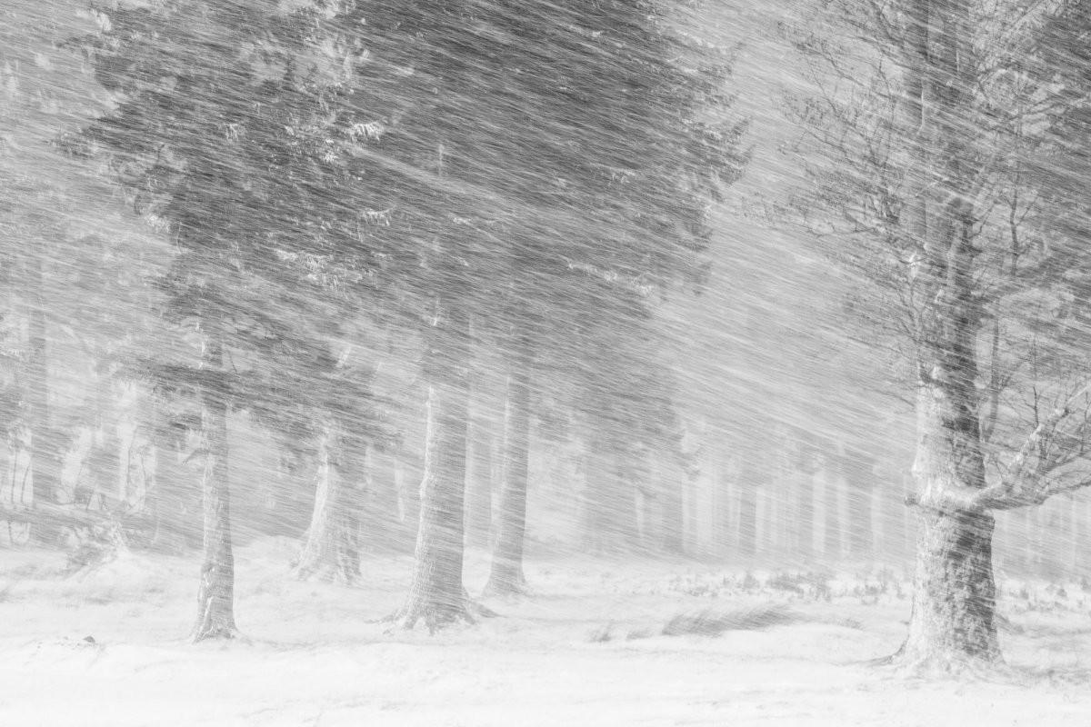 الصورة الفائزة بجائزة الثلج (BI)