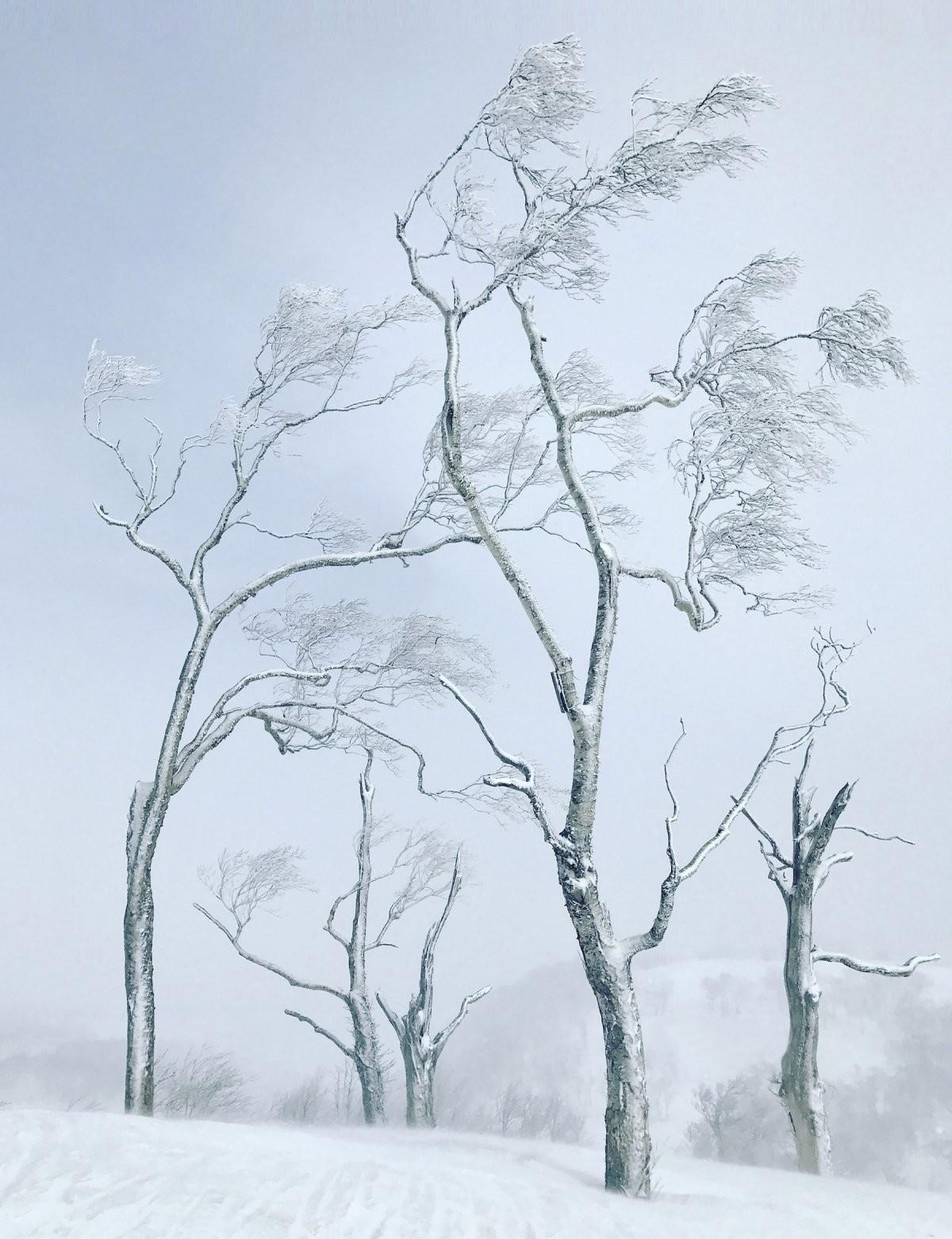 الصورة الفائزة بجائزة الشجرة (BI)