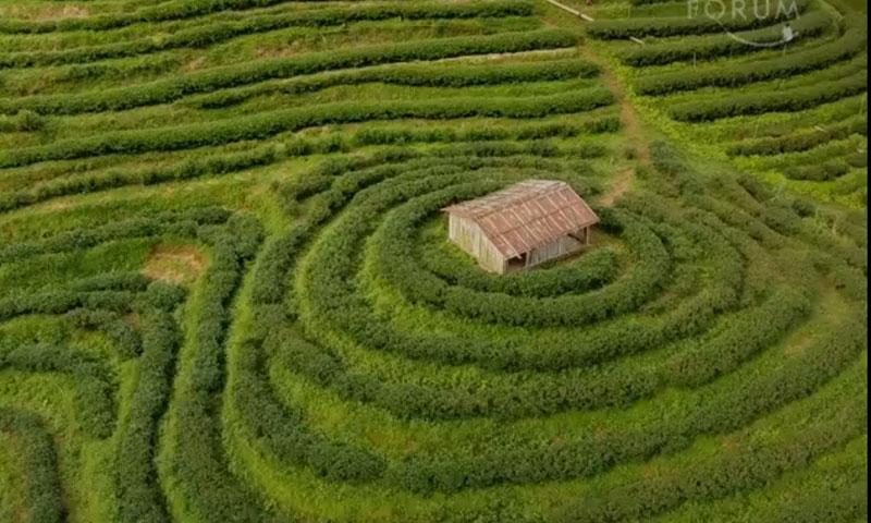 استعان المزارعون بخبراء لتحليل بيانات الأراضي والتزموا بنصائحهم (weforum)