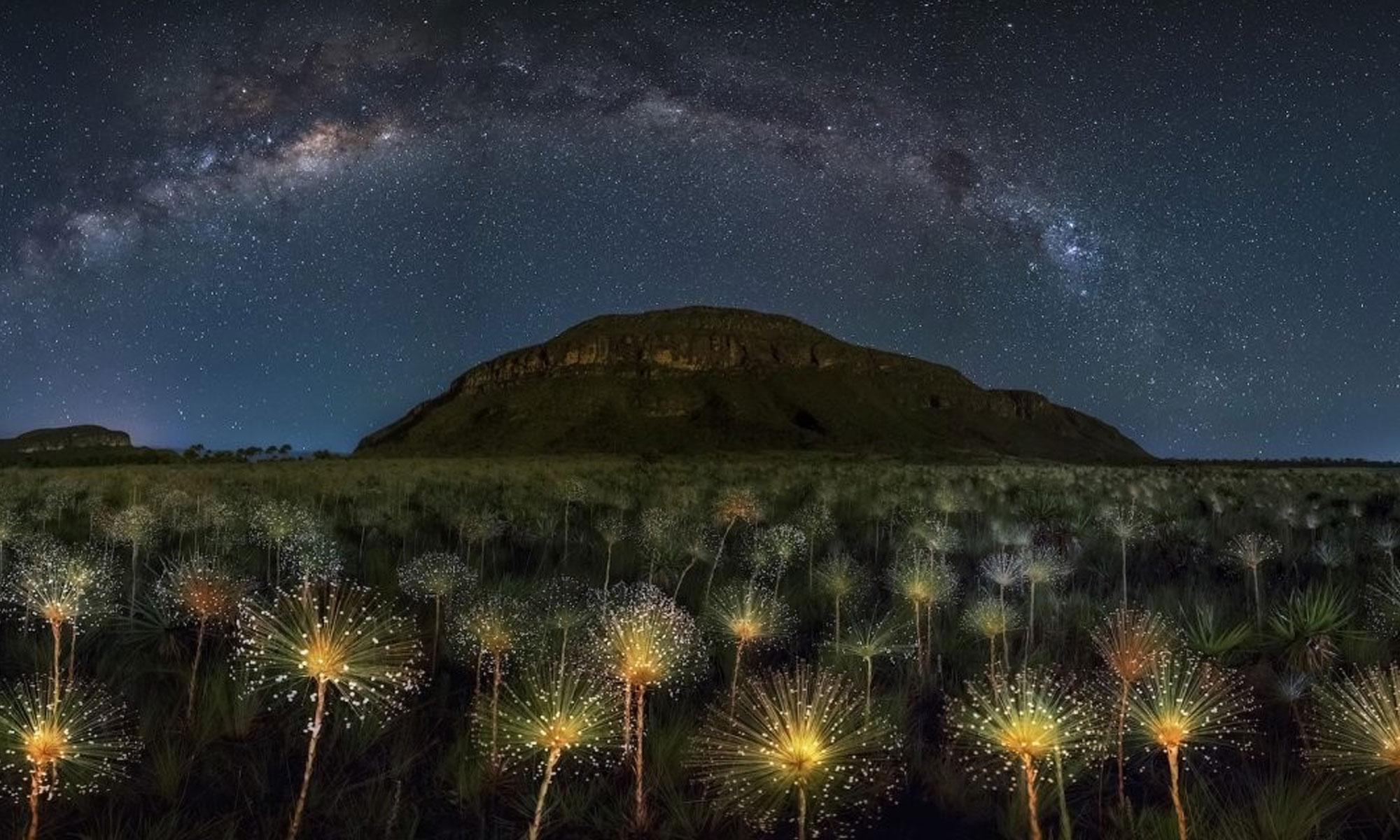 """أفضل صورة مأخوذة من حديقة """"فيديروس"""" الوطنية في البرازيل"""