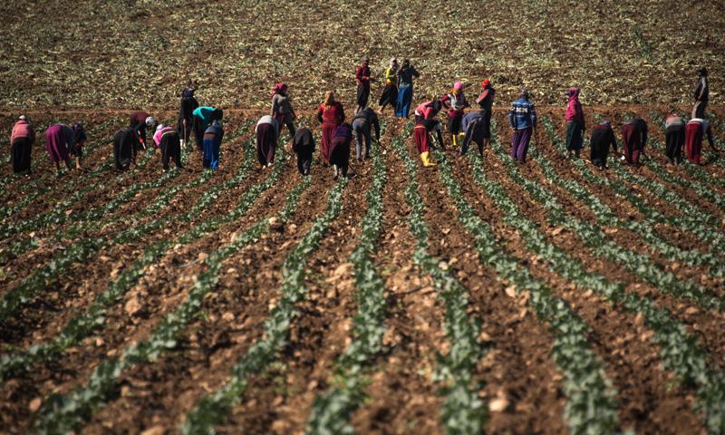 لاجئون سوريون يعملون في الزراعة في تركيا (Diego Cupolo)