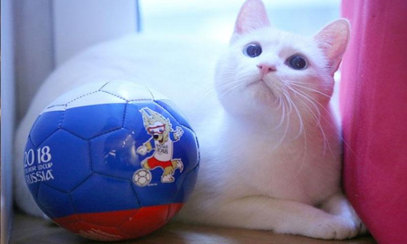 القط أخيل (تاس)