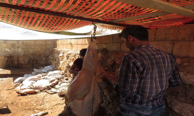 أضاحي العيد في ريف حماة (عنب بلدي)