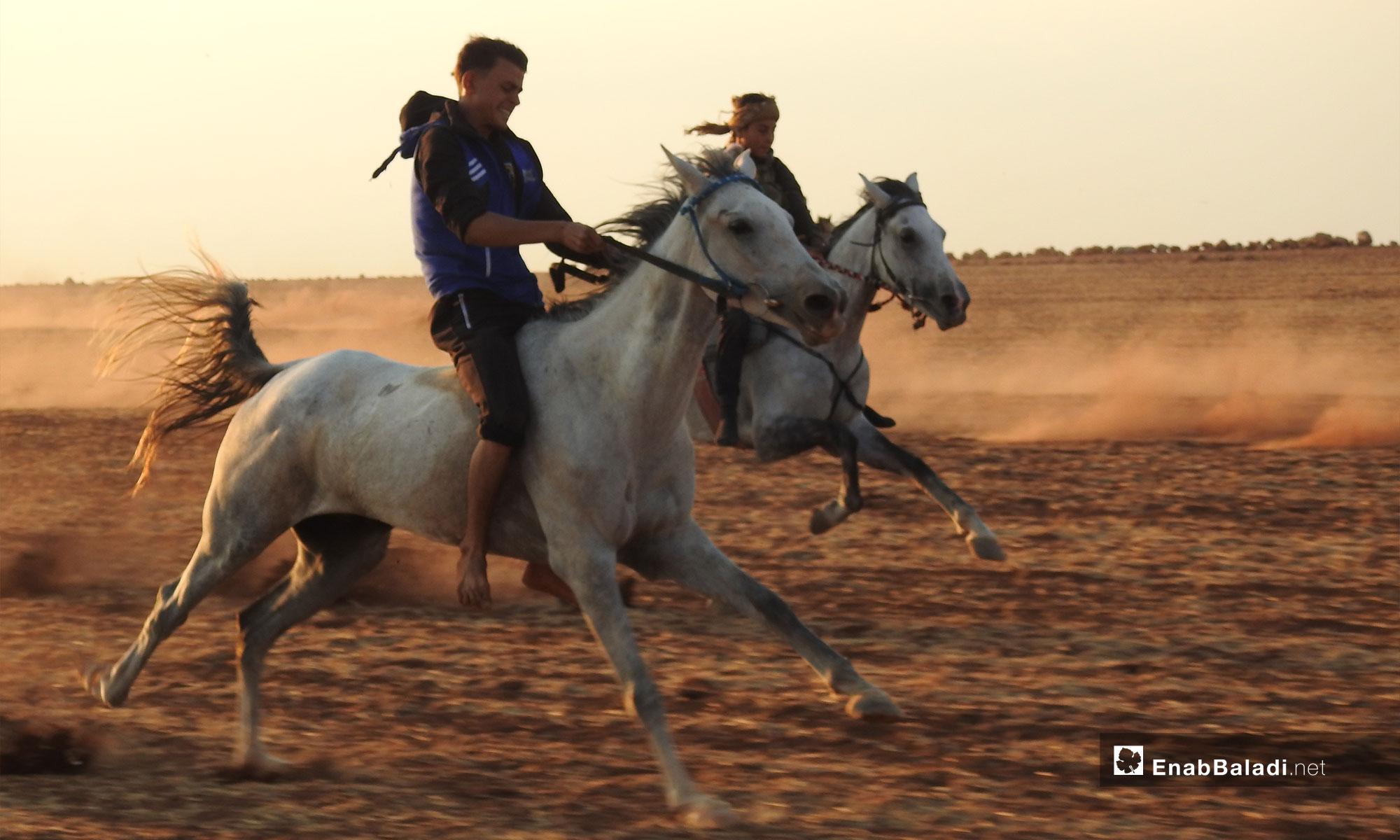 مهرجان الأصالة للخيول العربية في ريف حلب - 9 من أيلول 2018 (عنب بلدي)