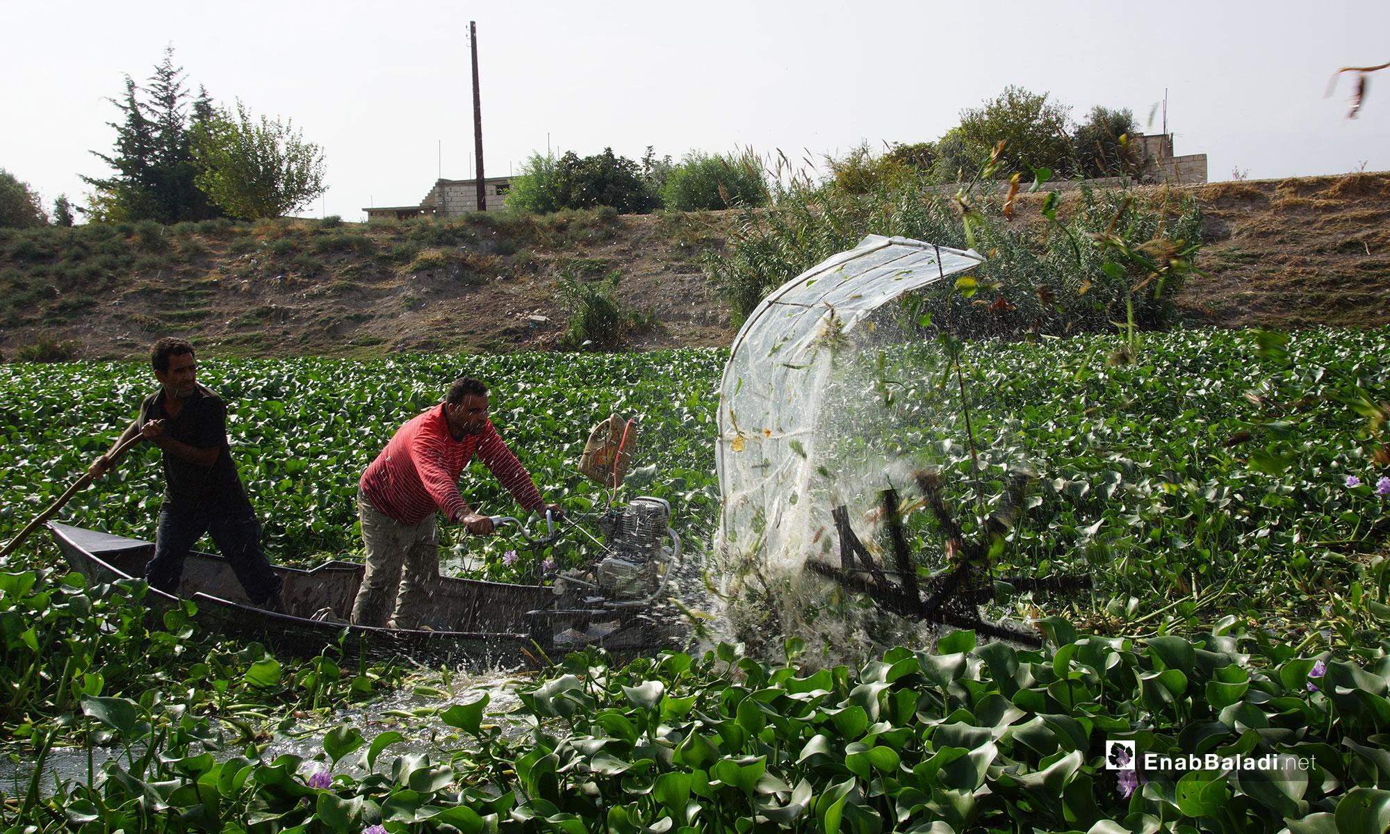 استخدام آلة جديدة للقضاء على زهرة النيل في سهل الغاب بريف حماة - 30 من تشرين الاول 2018 (عنب بلدي)