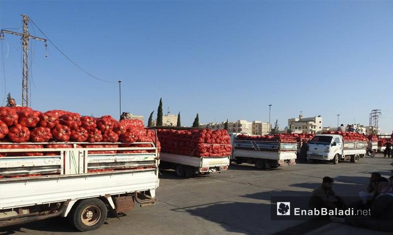 سيارات تحمل كميات من البصل في مدينة مارع بريف حلب الشمالي - 23 من تشرين الثاني 2018 (عنب بلدي)