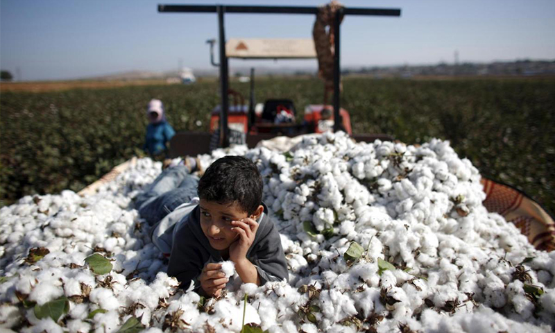 مؤيد طفل سوري يعمل في حقل للقطن في ولاية هاتاي جنوبي تركيا - 3 تشرين الثاني 2018 (رويترز)