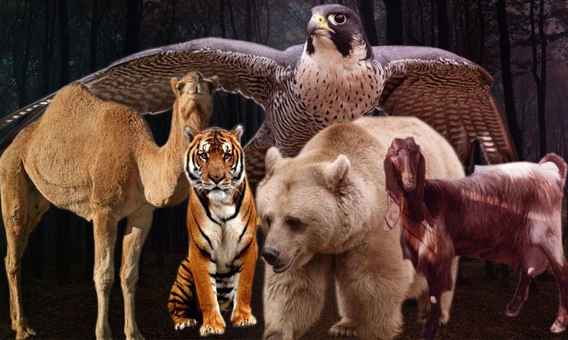 حيوانات سورية مهددة بالانقراض (تعديل عنب بلدي)