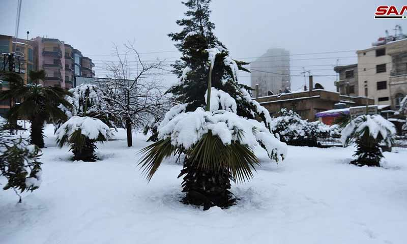 الثلوج-في-السويداء-17-كانون-الثاني-2019-سانا