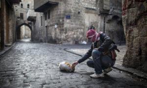 مقاتل من الجيش السوري الحر يطعم قطة في مدينة حلب - 6 كانون الثاني 2013 (AP)