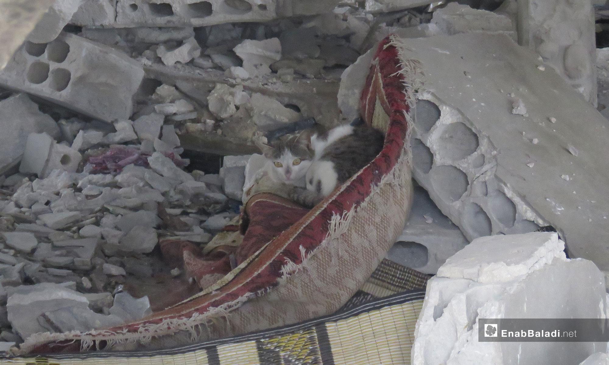 قطة تختبئ بين ركام المنازل في قرية الشريعة  بريف حماة - 31 من آذار 2019 (عنب بلدي)