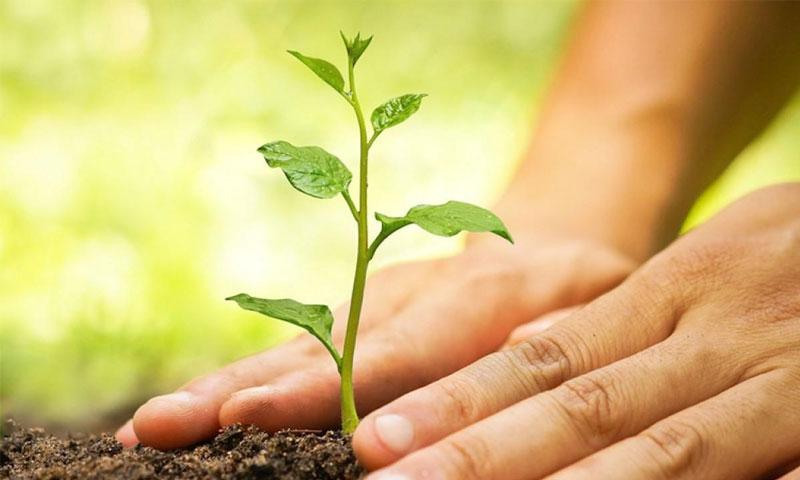 زراعة شجرة (إنترنيت)