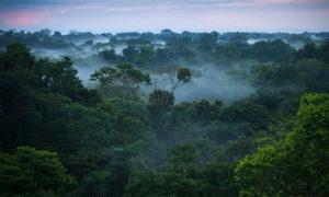 غابة الأمازون المطيرة (انترنيت)