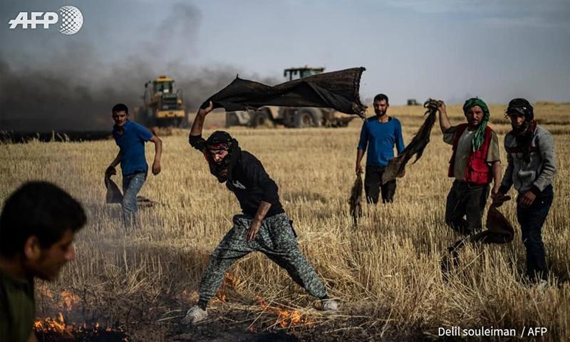 شبان يحاولون إخماد حرائق نشبت في محاصيل ناحية القحطانية في محافظة الحسكة - 10 من حزيران 2019 (AFP/ دليل سليمان)