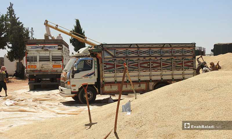 استقبال محصول الحبوب والمحاصيل الزراعية في مدينة الراعي بريف حلب - 2 من آب 2019 (عنب بلدي)