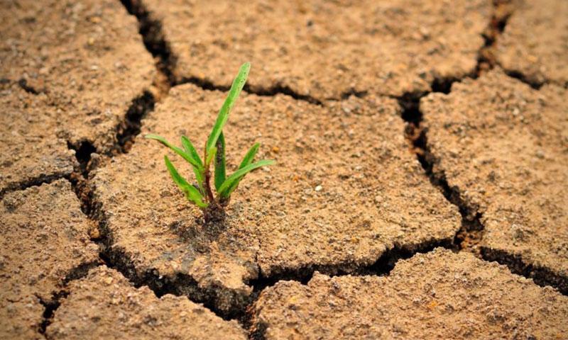 الجفاف (Budiu Alin)