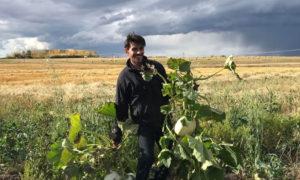 اللاجئ السوري محمد الضاهر في مزرعته في كالغري الكندية - أيلول 2019 (CBC)