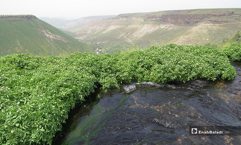 تتمتع بلدة زيزون الواقعة غربي محافظة درعا بحوالي 22 كيلوميترًا، بإطلالة ساحرة على وادي اليرموك- 23 من نيسان (عنب بلدي)