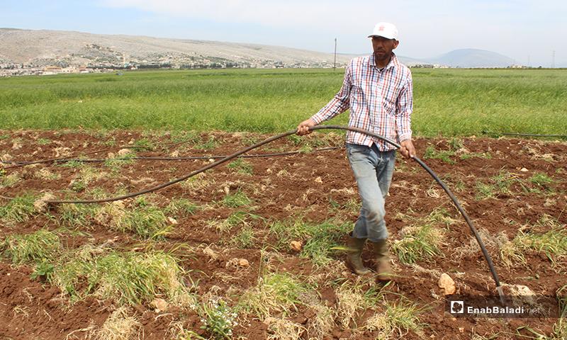 رجل يقوم بسقاية المزروعات في سهل الروج بريف إدلب - 16 من نيسان 2020 (عنب بلدي)