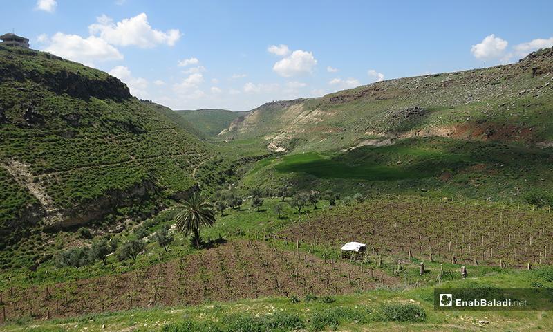 شلالات تل شهاب في ريف درعا - 12 من نيسان 2020 (عنب بلدي)