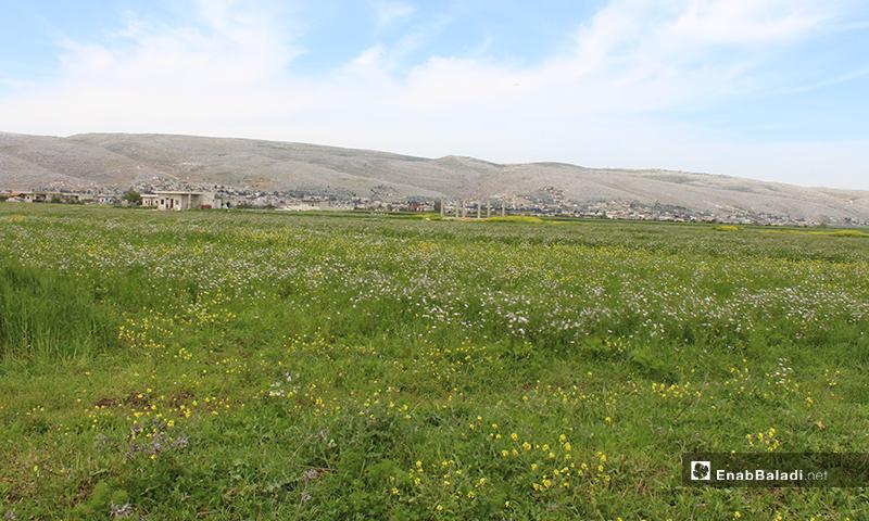 موسم الزراعة في سهل الروج بريف إدلب - 16 من نيسان 2020 (عنب بلدي)