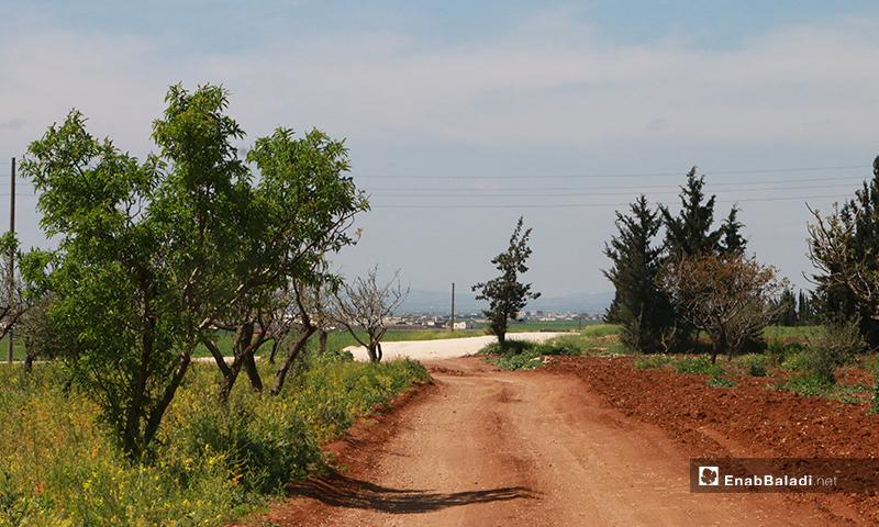 أراض زراعية تابعة إلى بلدة دابق بريف حلب الشمالي- 16 من نيسان (عنب بلدي)