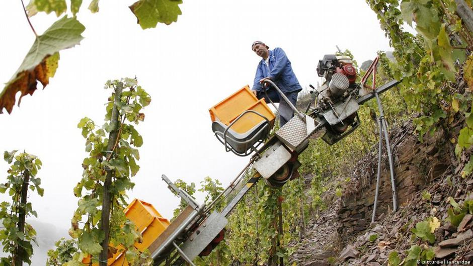 الاستعانة بطالبي اللجوء في ألمانيا لسد نقص اليد العاملة في قطاع الزراعة- نيسان 2020 (DW)